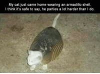 Memes, Home, and 🤖: My cat just came home wearing an armadillo shel.  I think it's safe to say, he parties a lot harder than I do.