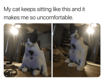 How, Cat, and This: My cat keeps sitting like this and it  makes me so uncomfortable. How I sit