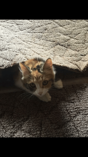 My cat likes to hide under rugs.: My cat likes to hide under rugs.