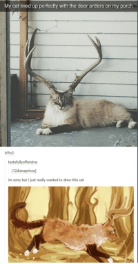 Deer, Sorry, and Cat: My cat lined up perfectly with the deer antlers on my porch  kf1n3  tastefullyoffensive:  12dianaprince]  im sorry but i just really wanted to draw this cat