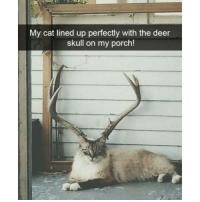 Funny, Porche, and Deer Skull: My cat lined up perfectly with the deer  skull on my porch! It looks so majestic (@hilarious.ted)