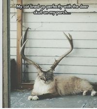 My cat lined up perfectly with the deer  skullon my  porch cat-olope
