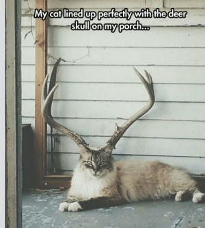 Deer, Tumblr, and Blog: My cat lined up perfectly with the deer  skulonmyporch.o epicjohndoe:  It's Probably A New Rare Species