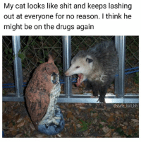 Kitty Ketamine is becoming a serious problem. (RP♻️ @some_bull_ish - follow @some_bull_ish he's funny as fuck) • • • cat cats kittensofinstagram catsofinstagram drugs vet possum opossum animal animals animalkingdom kitten kitty meme memes dank dankmemes memesdaily memeoftheday instagood picoftheday photooftheday cute love me follow followme lol funny joke: My cat looks like shit and keeps lashing  out at everyone for no reason. I think he  might be on the drugs again  @some bull_ish Kitty Ketamine is becoming a serious problem. (RP♻️ @some_bull_ish - follow @some_bull_ish he's funny as fuck) • • • cat cats kittensofinstagram catsofinstagram drugs vet possum opossum animal animals animalkingdom kitten kitty meme memes dank dankmemes memesdaily memeoftheday instagood picoftheday photooftheday cute love me follow followme lol funny joke