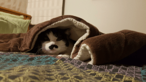 Her, Cat, and Loves: My cat loves snuggling her way under blankets