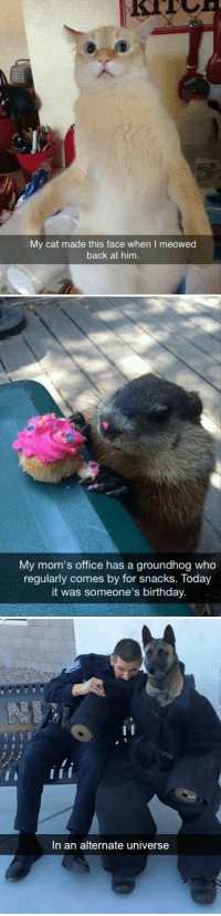 Birthday, Moms, and Target: My cat made this face when I meowed  back at him.   My mom's office has a groundhog who  regularly comes by for snacks. Today  it was someone's birthday.   In an alternate universe animalsnaps:Animal snaps