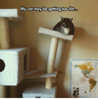 srsfunny:Gaining Some Weight: My cat may be getting too fat... srsfunny:Gaining Some Weight