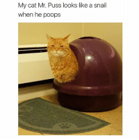 Catto doin a snail (@hilarious.ted): My cat Mr. Puss looks like a snail  when he poops Catto doin a snail (@hilarious.ted)