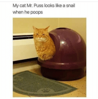 poops: My cat Mr. Puss looks like a snail  when he poops