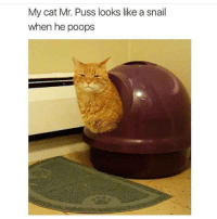 Cat, Snail, and Puss: My cat Mr. Puss looks like a snail  when he poops