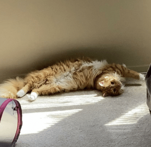 My cat naps in all directions.: My cat naps in all directions.