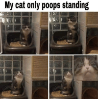 face of extreme concentrate: My cat only poops standing face of extreme concentrate