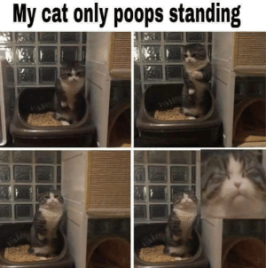 *face of extreme concentrate* via /r/funny https://ift.tt/2qsRjlk: My cat only poops standing *face of extreme concentrate* via /r/funny https://ift.tt/2qsRjlk
