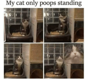 Cat, Talented, and  Poops: My cat only poops standing Talented pooping cat