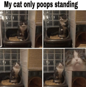 That hits the spot: My cat only poops standing That hits the spot