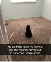 Im Not Crying: My cat Pepe loved my roomie  and she recently moved out.  I'm not crying, you're crying