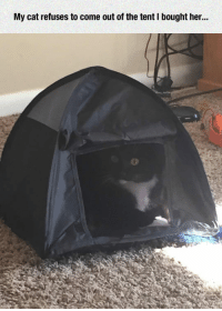 Soon..., Tumblr, and Blog: My cat refuses to come out of the tent I bought her.. lolzandtrollz:  Not Coming Out Anytime Soon