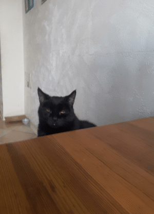 My cat sat down with us for breakfast today: My cat sat down with us for breakfast today