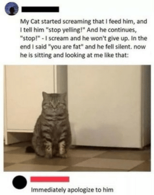 "Scream, Fat, and MeIRL: My Cat started screaming that I feed him, and  I tell him ""stop yelling!"" And he continues  ""stop! -I scream and he won't give up. In the  end I said ""you are fat"" and he fell silent. now  he is sitting and looking at me like that:  Immediately apologize to him Meirl"