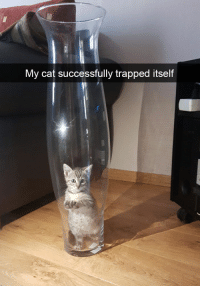 19+ Funny Cat Snapchats That You Need To See Right Meow: My cat successfully trapped itself 19+ Funny Cat Snapchats That You Need To See Right Meow