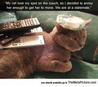 Tumblr, Blog, and Couch: My cat took my spot on the couch, so I decided to annoy  her enough to get her to move. We are at a stalemate.  you should probably go to TheMetaPicture.com epicjohndoe:  So My Cat Took My Spot On The Couch