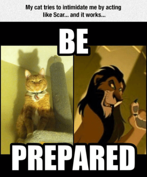 srsfunny:Acting Like Scar: My cat tries to intimidate me by acting  like Scar... and it works...  BE  PREPARED srsfunny:Acting Like Scar