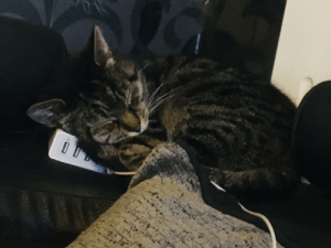 My cat was outside befor, he ran in and fell asleep on the charger now hes supa cute uwu (i might post my doggo too ): My cat was outside befor, he ran in and fell asleep on the charger now hes supa cute uwu (i might post my doggo too )