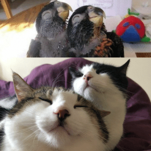 My cats are trying to outdo The Smug Birds. | Funny Cats | Cats ...: My cats are trying to outdo The Smug Birds. | Funny Cats | Cats ...