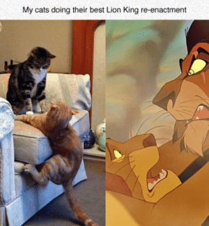 lolzandtrollz:Best Reenactment: My cats doing their best Lion King re-enactment lolzandtrollz:Best Reenactment