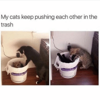 Cats, Trash, and Each Other: My cats keep pushing each other inthe  trash Rawr