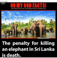 Memes, 🤖, and Cod: MY COD FACTS!  www.omg facts online.com  I fb.com/omegfactsonline eohnygod facts  VIP Lanka Tours  The penalty for killing  an elephant in Sri Lanka  is death. How it should be