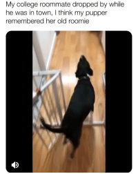 Blessed, College, and Memes: My college roommate dropped by while  he was in town, I think my pupper  remembered her old roomie SOUND ON 🔊 YOU'VE BEEN BLESSED 😍 (📹: reddit u-CuriousCatLiving)