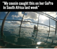 """Dank, 🤖, and Cousins: """"My cousin caught this on her GoPro  in South Africa last week"""" 10/10 would sh*t pants..."""