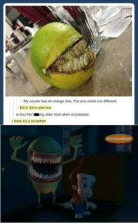 Coincidence? I think not! Enjoy!: My cousin has an orange tree, this one came out different.  Kill it. Kill it with fire.  is that the f  ng alien from alien vs predator  I think it's a leviathan Coincidence? I think not! Enjoy!