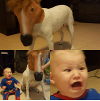 My cousin placed a horse mask on his dog, his son didn't see the humor in it.: My cousin placed a horse mask on his dog, his son didn't see the humor in it.