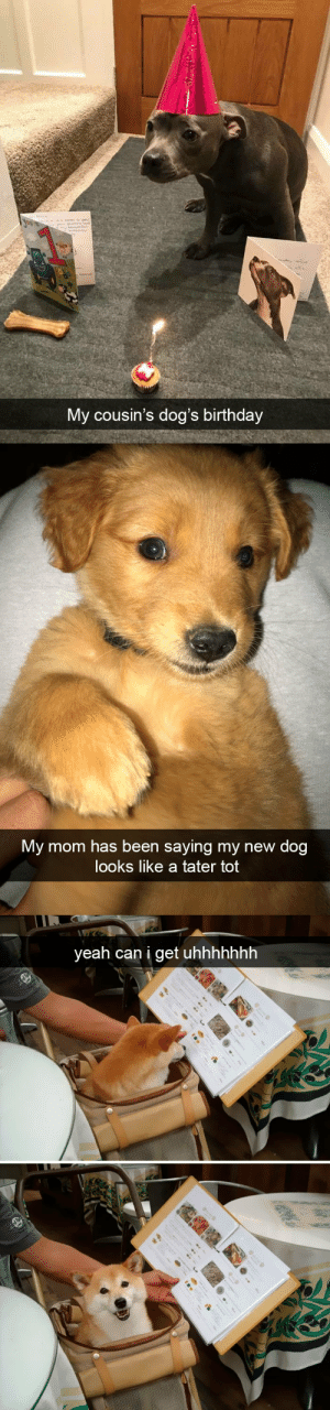 babyanimalgifs:  Dog snapsvia @animalsnaps: My cousin's dog's birthday   My mom has been saying my new dog  looks like a tater tot   yeah can i get uhhhhhhh babyanimalgifs:  Dog snapsvia @animalsnaps
