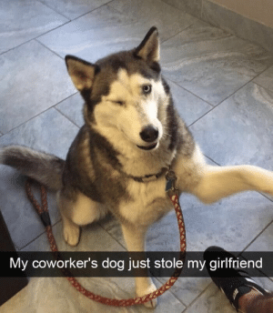 Game, Girlfriend, and Got: My cowo  rker's dog just stole my girlfriend Got more game than me