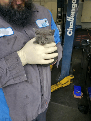 My dad found this little guy in the engine of a customers car at his work. He does not look amused.: My dad found this little guy in the engine of a customers car at his work. He does not look amused.