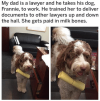 (@x__social_butterfly__x) is the cutest meme page on IG! (Reddit u-benjals4): My dad is a lawyer and he takes his dog,  Frannie, to work. He trained her to deliver  documents to other lawyers up and down  the hall. She gets paid in milk bones. (@x__social_butterfly__x) is the cutest meme page on IG! (Reddit u-benjals4)
