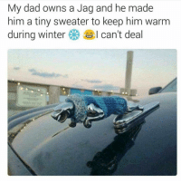Memes, Winter, and 🤖: My dad owns a Jag and he made  him a tiny sweater to keep him warm  during winter  I can't deal Find you a man that treats his jag like that😂