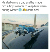 Funny, Jag, and Him: My dad owns a Jag and he made  him a tiny sweater to keep him warm  during winter I can't deal