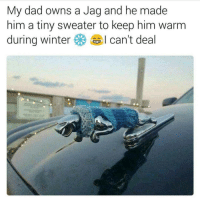 Ironic, Winter, and Potato: My dad owns a Jag and he made  him a tiny sweater to keep him warm  during winter  I can't deal I WANT FOOD BUT I DONT KNOW WHAT TO GET does SWEET POTATO TASTE THE SAME AS NORMAL POTATO ?????