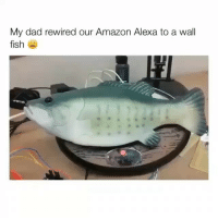 Amazon, Dad, and Fish: My dad rewired our Amazon Alexa to a wall  fish THIS IS AMAZING!