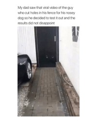 tag someone with dogs who should totally do this: My dad saw that viral video of the guy  who cut holes in his fence for his nosey  dog so he decided to test it out and the  results did not disappoint tag someone with dogs who should totally do this