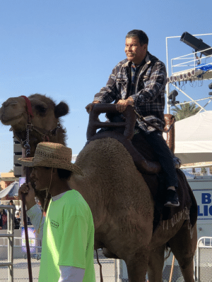 My dad wanted to ride a camel at the fair.: My dad wanted to ride a camel at the fair.