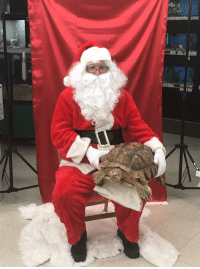 Dad, Petsmart, and Santa: My dad was Santa at our local Petsmart, was not expecting this