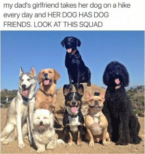 This image was shared via LOL Pics: my dad's girlfriend takes her dog on a hike  every day and HER DOG HAS DOG  FRIENDS. LOOK AT THIS SQUAD This image was shared via LOL Pics