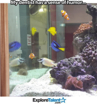 That is 1 proper fish tank right there...: My dentist hasasense of humor.  Talent  Explore That is 1 proper fish tank right there...