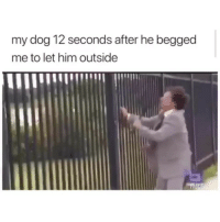 Memes, 🤖, and Dog: my dog 12 seconds after he begged  me to let him outside uncool bro @_theblessedone