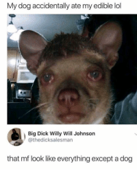 Big Dick, Lol, and Dick: My dog accidentally ate my edible lol  Big Dick Willy Will Johnson  @thedicksalesman  that mf look like everything except a dog 😂😂😭